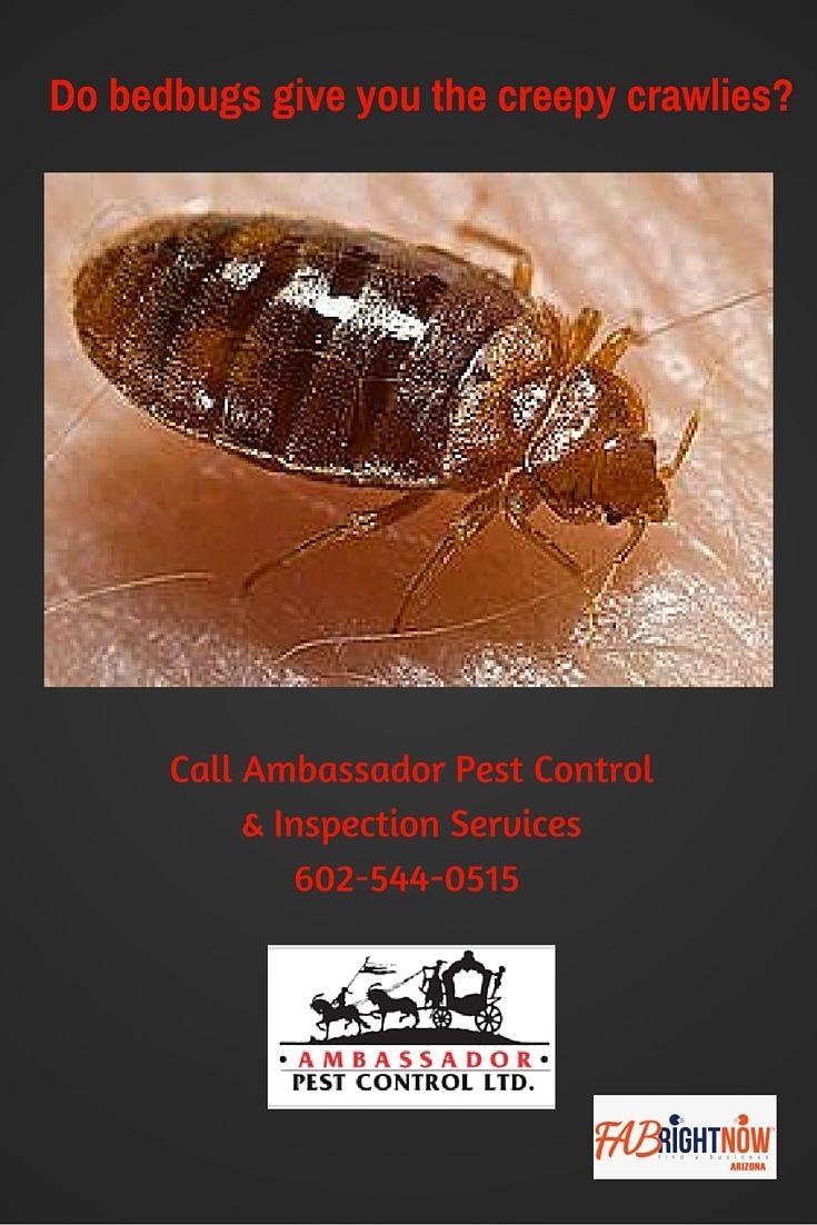 Bed bugs removal ambassador pest control 602 5440515