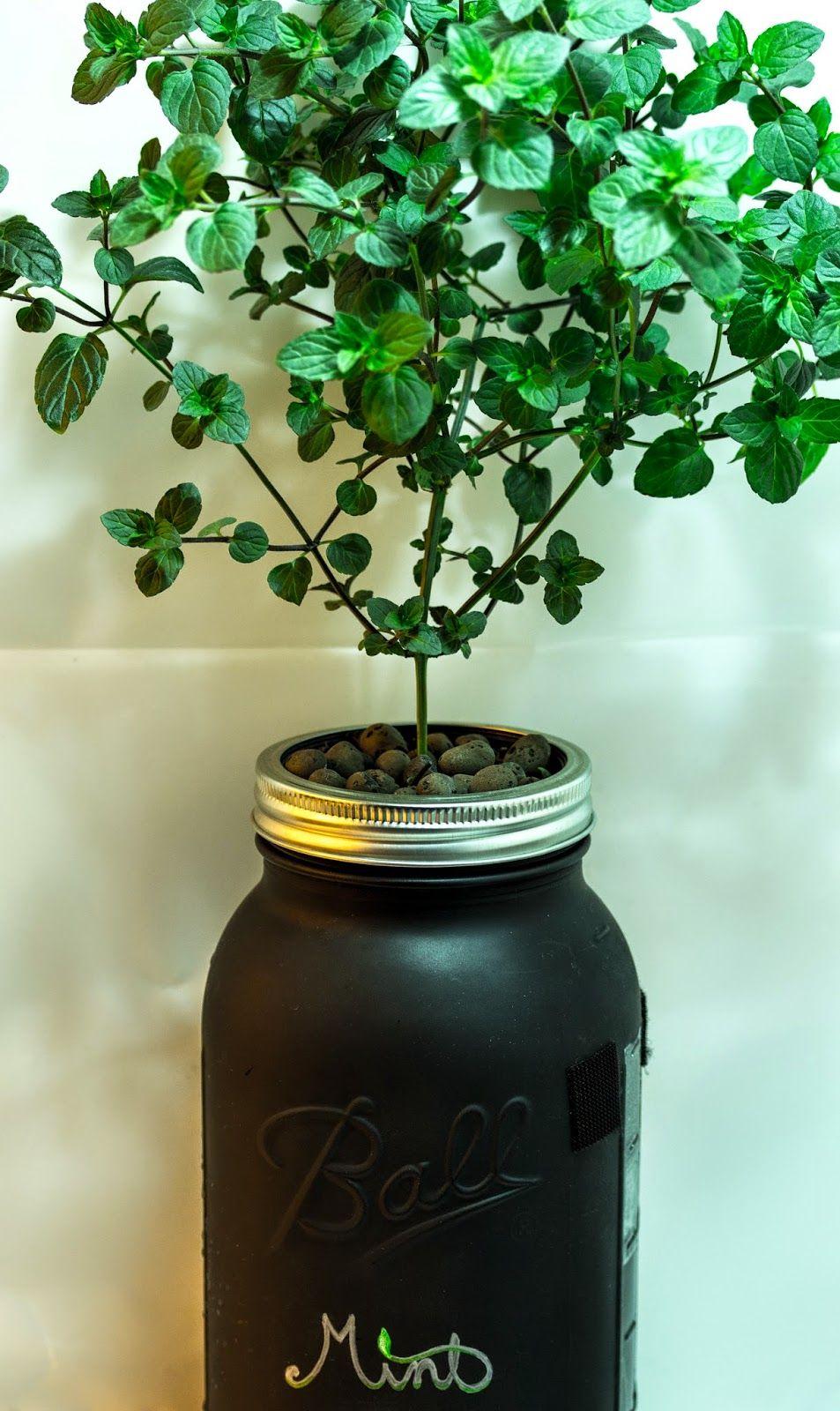 Macro Garden DIY Mason Jar NonCirculating Hydroponics