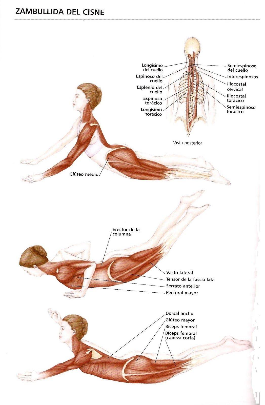 Pilates Marisa: Los básicos de Pilates: The Swan-dive (El ...