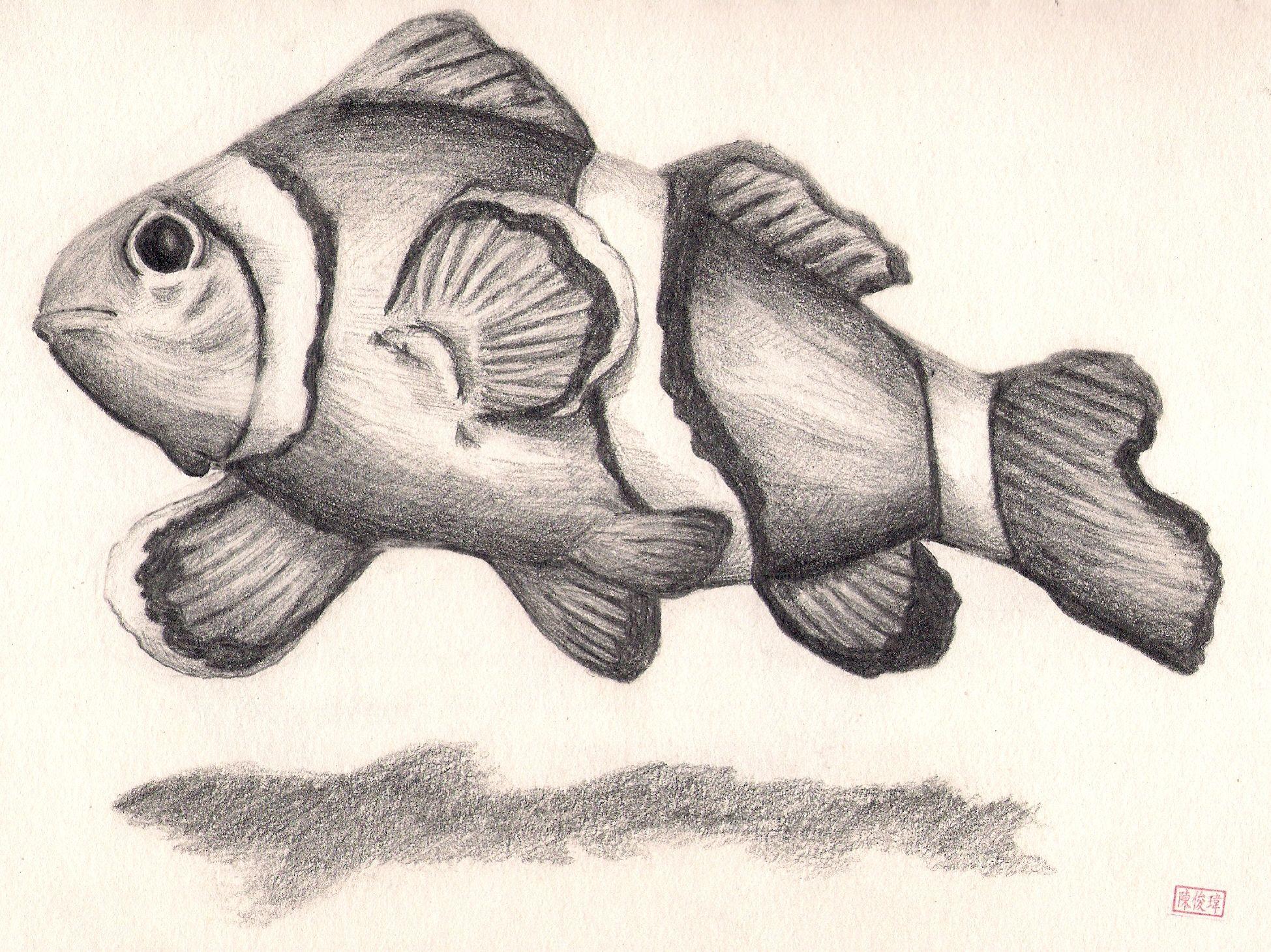 Clownfish couple drawings fish drawings horse drawings pencil drawings basic sketching