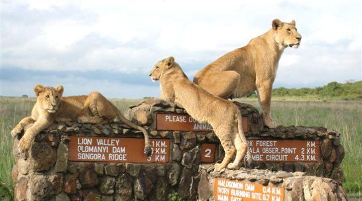 http://kenya-one-1-day-tours.weebly.com/nairobi-kenya.html
