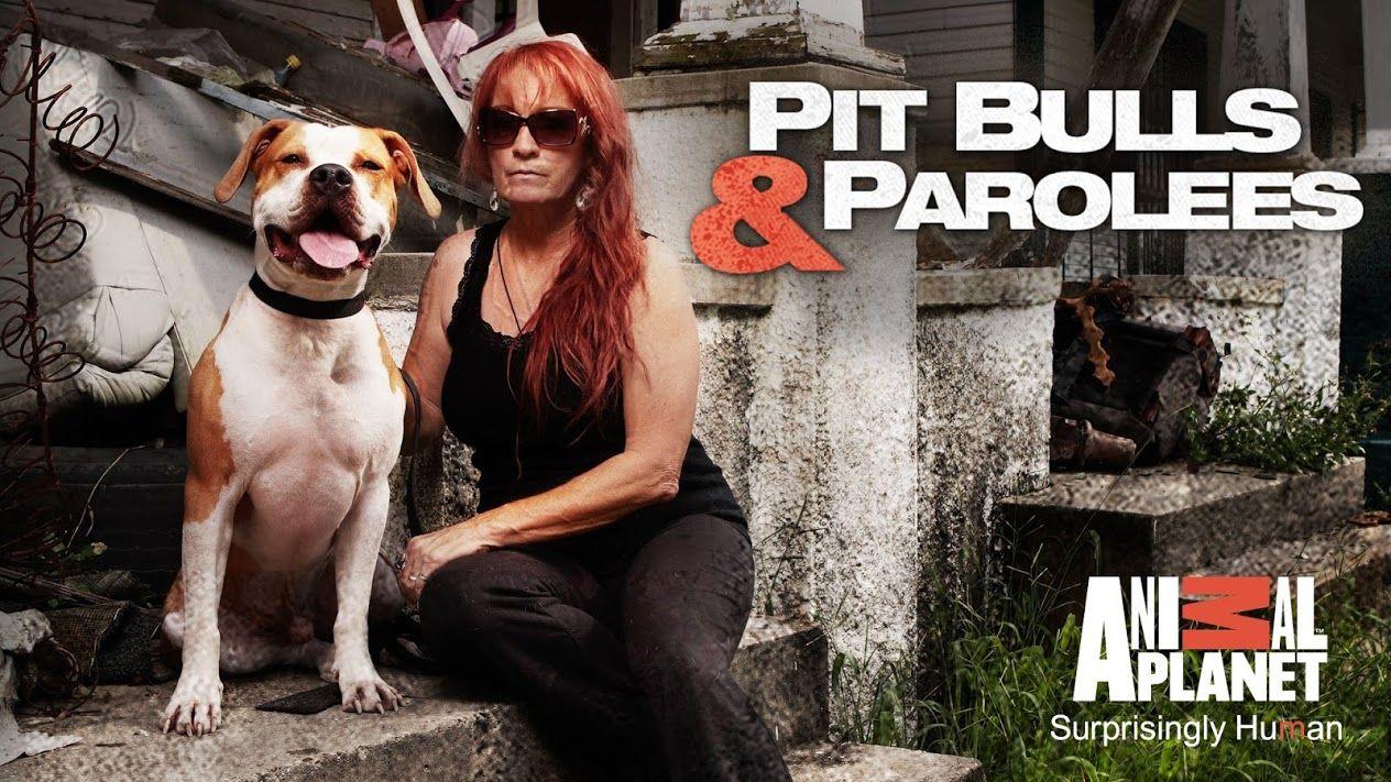Pit Bulls Parolees Renewed For Season 8 By Animal Planet With Images Pit Bulls Parolees Animal Planet Pitbulls