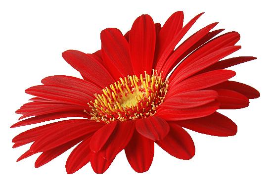 Картинки цветы клипарт