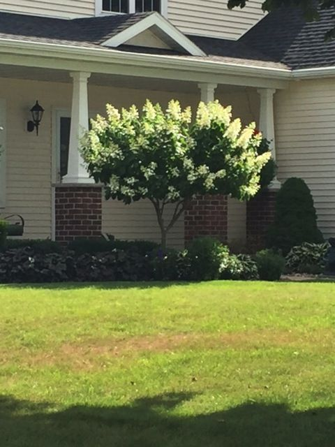 Example Of Small Tree For Near Corner Of House Outdoor Gardens Small Trees Outdoor