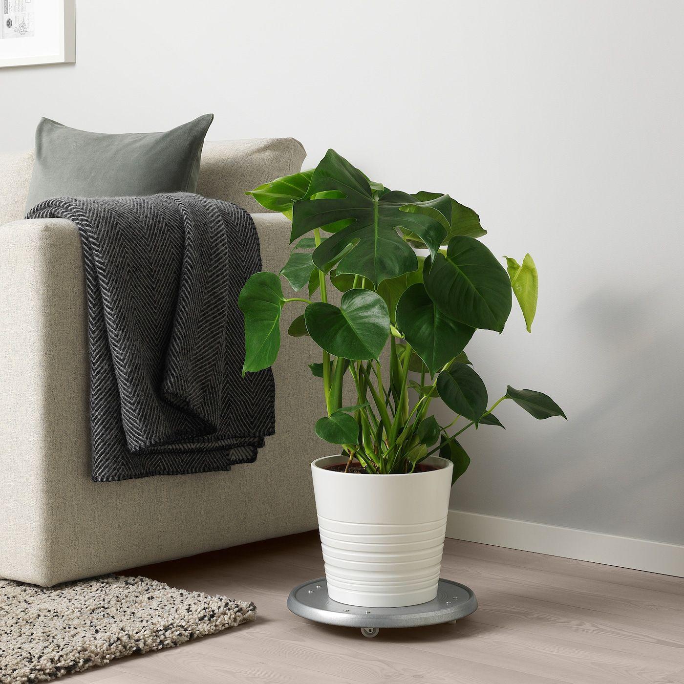 Monstera Pflanze Fensterblatt Ikea Deutschland In 2020 Monstera Pflanzen Wohnung Pflanzen