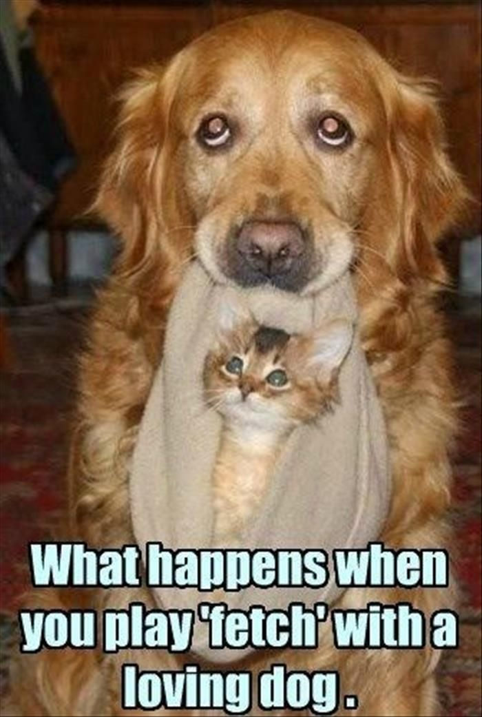 Funny Animal Pictures Of The Day 25 Pics Funny Animals Funny Animal Pictures Cute Animals