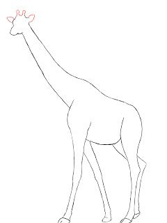 How To Draw A Giraffe | Draw Central