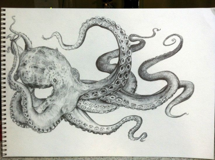 Black And Grey Octopus Tattoos Google Search Octopus Drawing Octopus Sketch Octopus Painting