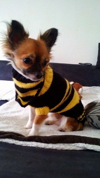 Hundepullover selber gemacht,Dog Sweater,Puppy,knitting, www ...