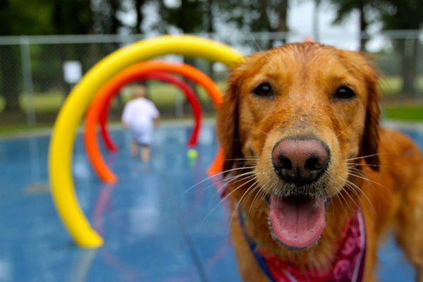 10 Amazing Dog Parks You Need To See In Your Lifetime With Images Dog Park Dog Park Equipment Dogs