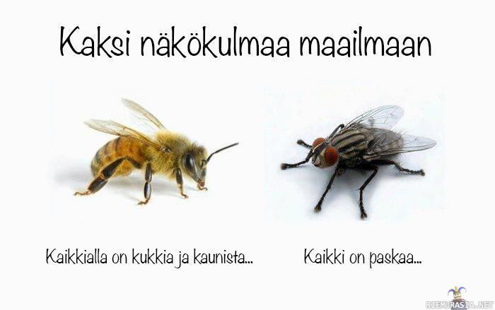 Kaksi näkökulmaa - Two ways to view the world: There are flowers everywhere and it's so beatiful OR what the fly thinks?