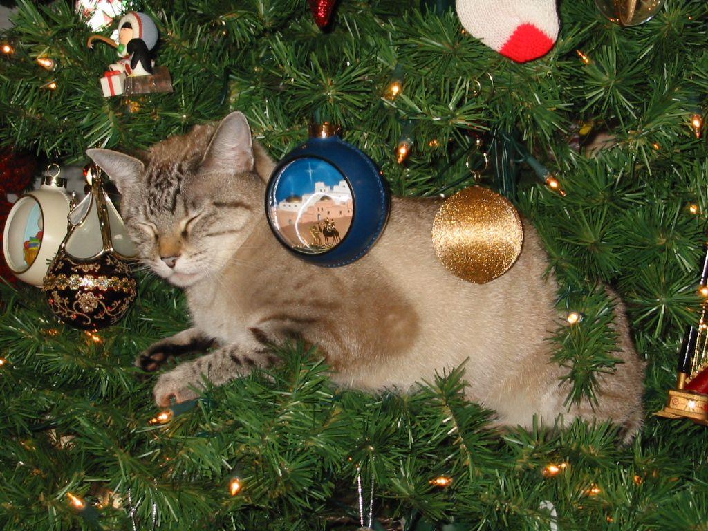 Gracie 2011 Asleep in the Christmas tree