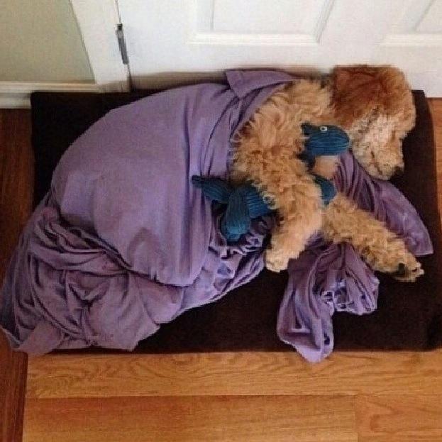 sweet dreams, dog cuddles with teddy. cute!