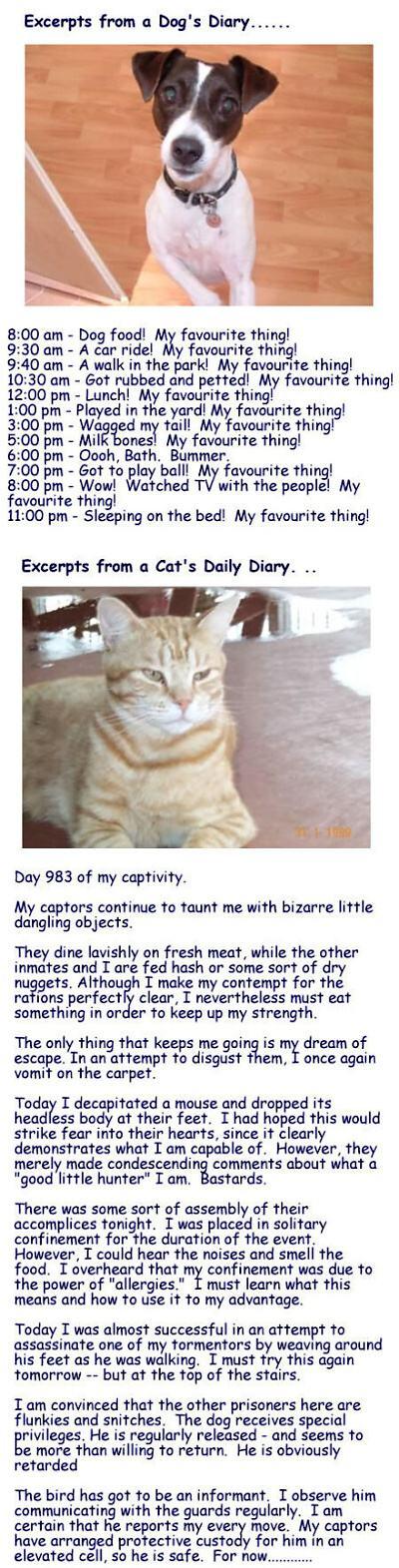 Dog Diary Vs Cat Diary