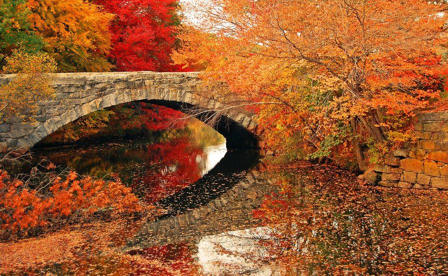 Beautiful fall bridge!