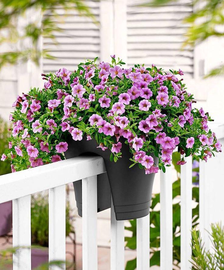 Фото цветов на балконе