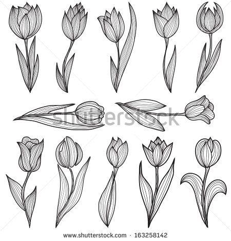 Set Of 12 Hand Drawn Decorative Tulip Flowers Design Elemets Tulip Tattoo Flower Tattoos Tulips Flowers