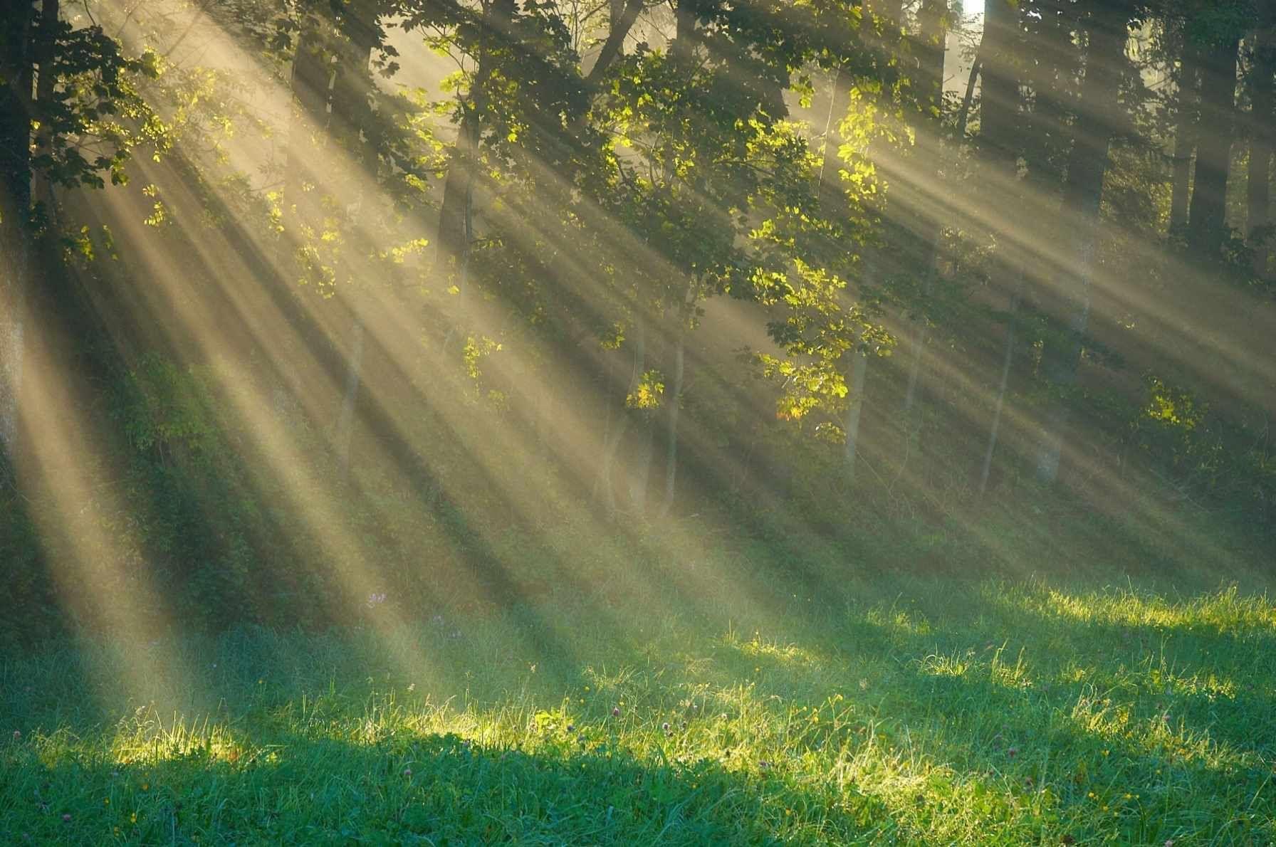 Vitamina soarelui – sfaturi pentru intarirea sistemului imunitar - TaBu