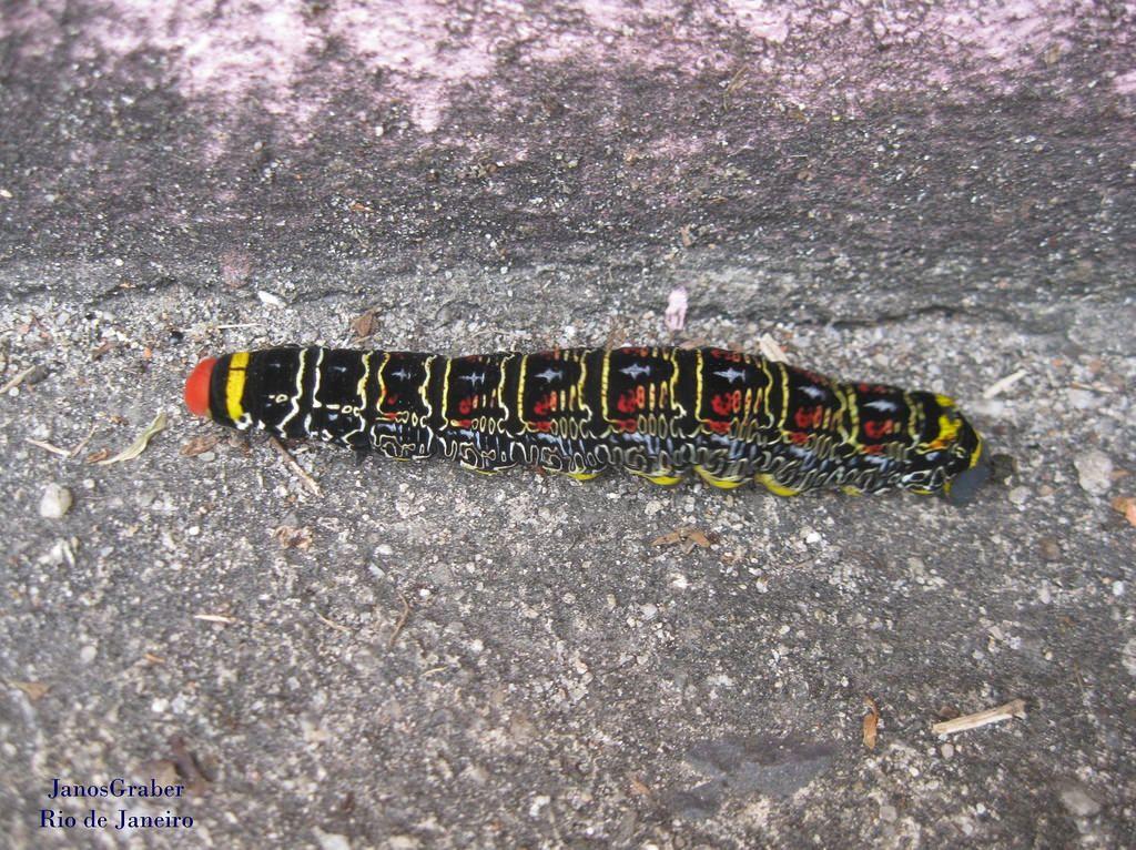 https://flic.kr/p/tQqoSX | Lagarta | Uma lagarta com muito estilo. Rio de Janeiro