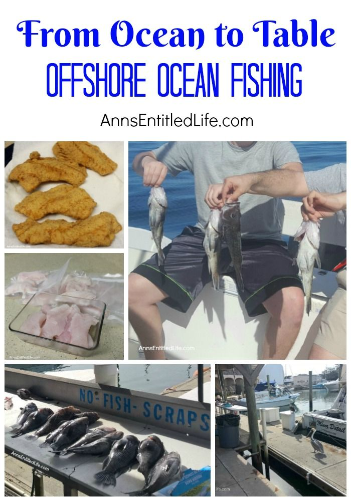 Offshore Ocean Fishing - From Ocean to Table. A day of Atlantic Ocean offshore fishing on a charter boat in the St Augustine, Florida, Jacksonville, Florida area. The catch goes from ocean, to our dining room table!