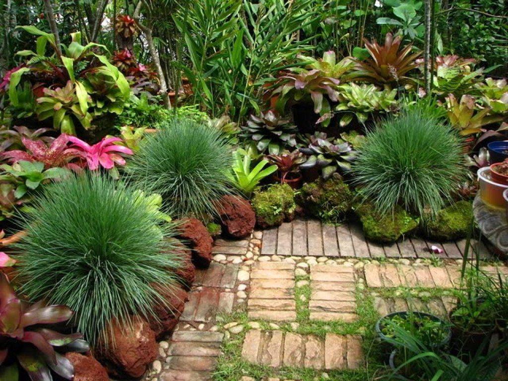 Recopilaci n de jardines tropicales tan bellos que for Plantas tropicales de interior