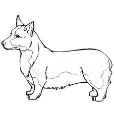 corgi coloring pages Top 25 Free Printable Dog Coloring Pages Online | Corgi coloring  corgi coloring pages