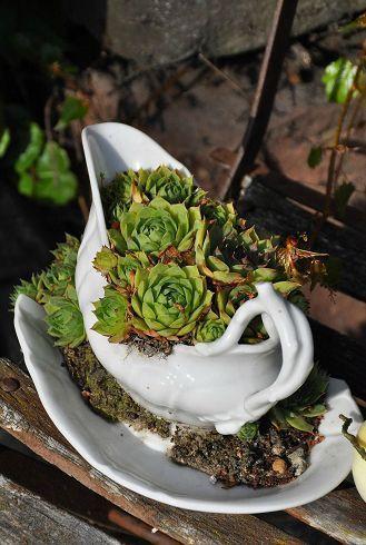 Pin von heidi m auf garten deko garten garten deko und for Ausgefallene zimmerpflanzen