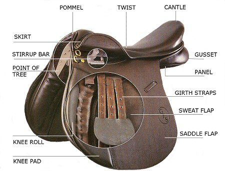 Parts Of An English Saddle Horse Girl Pinterest