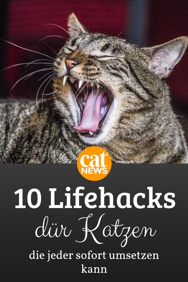 Life hacks für Katzen: 10 Tricks, die jeder Katzenhaushalt kennen muss #katzengeburtstag
