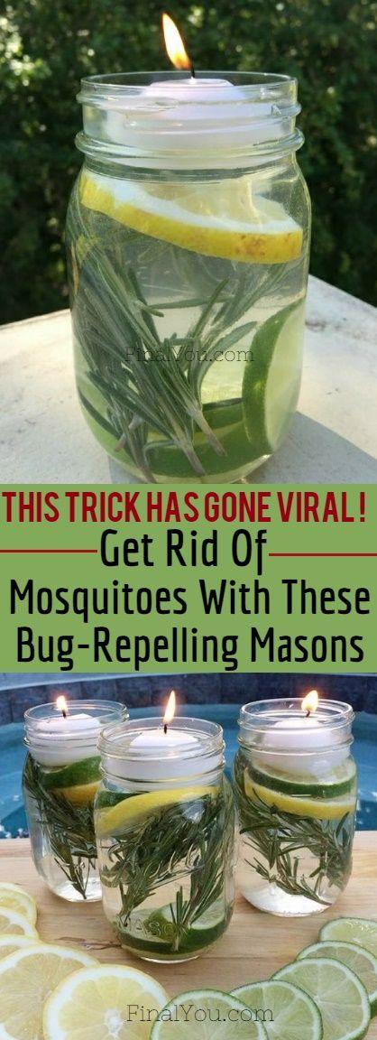 Antorchas Para Mosquitos