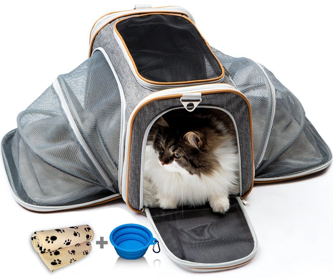 Amazon Com Cat Carrier Dog Carrier Pet Carrier For Cats Cat