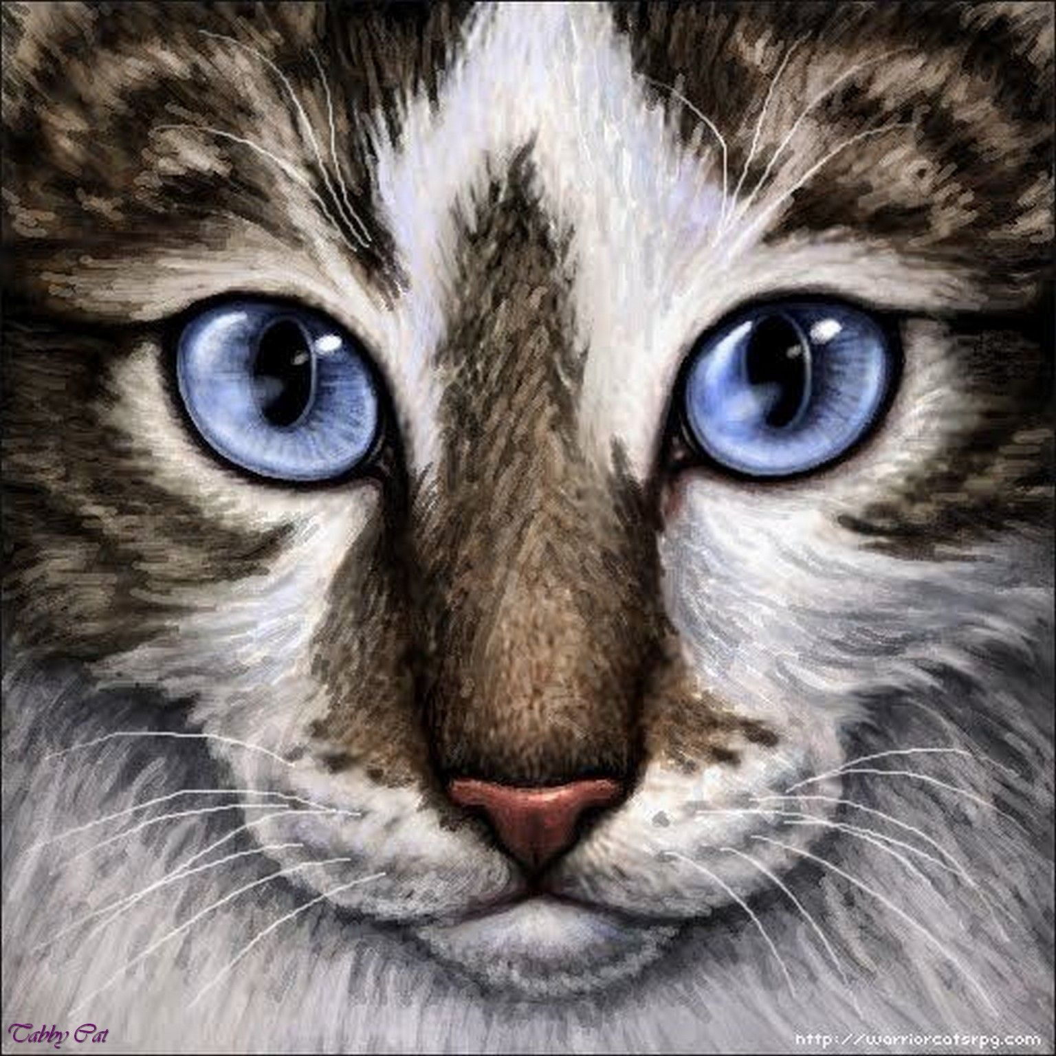 Tabby Cat Eye Disorders Problems To Be Aware Of