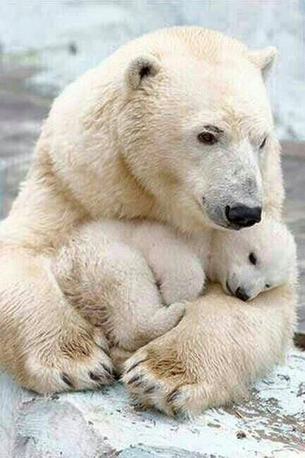 Photo of Polar Bears –   – #bears #beautifultattoos #Gargoyletattoo #meaningfultattoos #p…