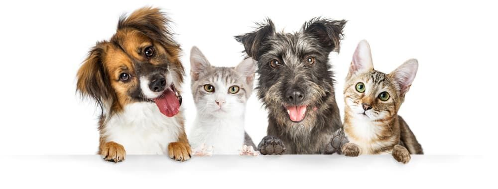 Pet Insurance Cost Cute Dogs Cute Cats And Dogs Pets
