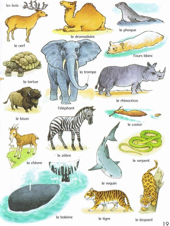 Les animaux; la chèvre 山羊; le requin鯊魚;le phoque海豹; le