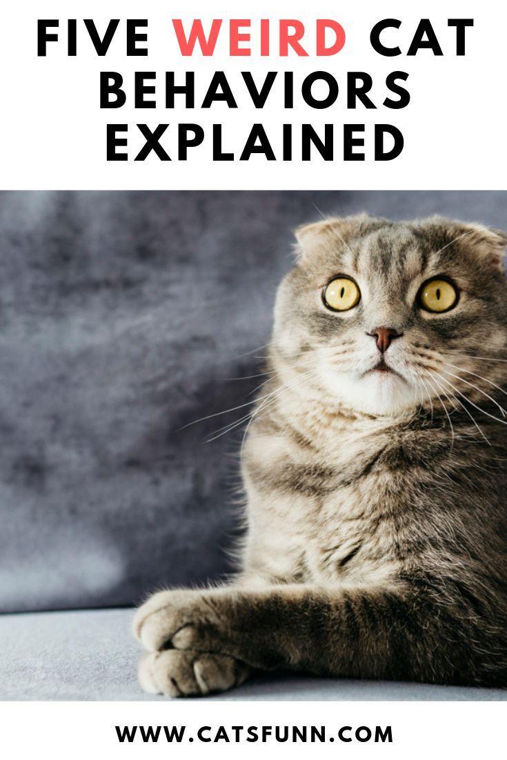 5 Weird Cat Behavior Explanations Crazy cats, Cat