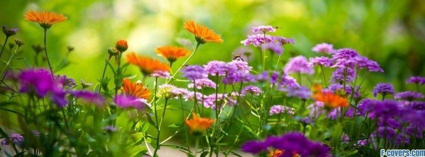 Flowers Summer Garden Facebook Cover Timeline Photo Banner For Fb