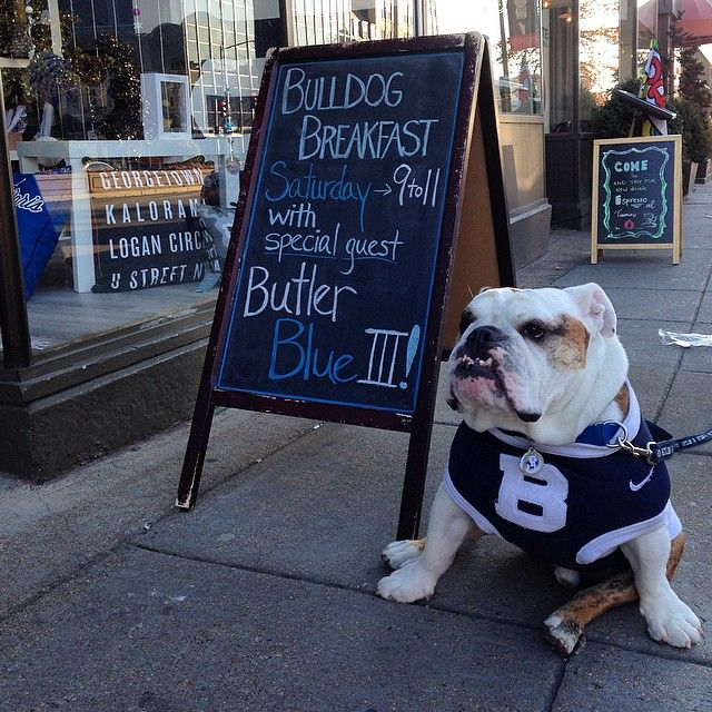 It S A Bulldog Breakfast At Thecheekypuppy Posted Up From 9 11