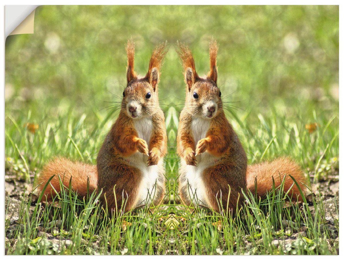 Compre la película de pared de Artland »Kattobello: gemelos ardilla roja« en línea OTTO