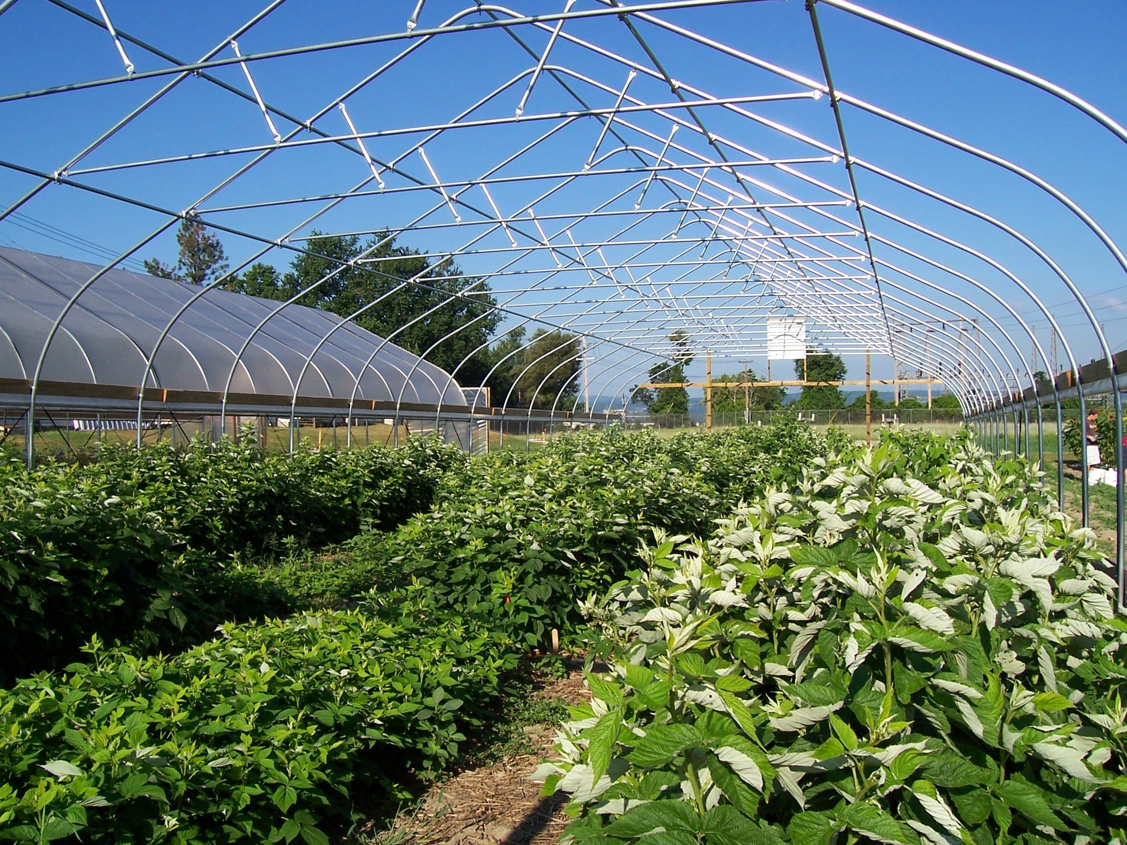 cornell university in ithaca ny uses a rimol greenhouse systems high tunnel for growing fruits - Rimol Greenhouse Of Photos