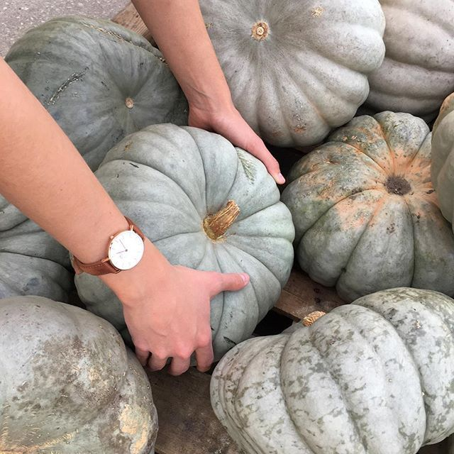 I Don't Always Pick Up Pumpkins. But When I Do, I Wear My