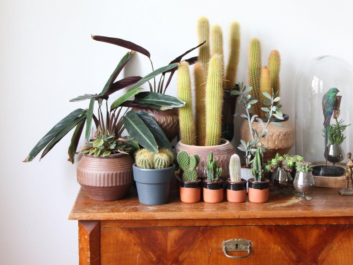 wir lieben kakteen die sch nsten kaktus accessoires f r dein zuhause leben pinterest. Black Bedroom Furniture Sets. Home Design Ideas