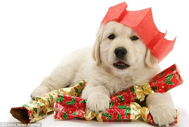 Puppies For Christmas Adorable Youtube Montage Shows Delighted