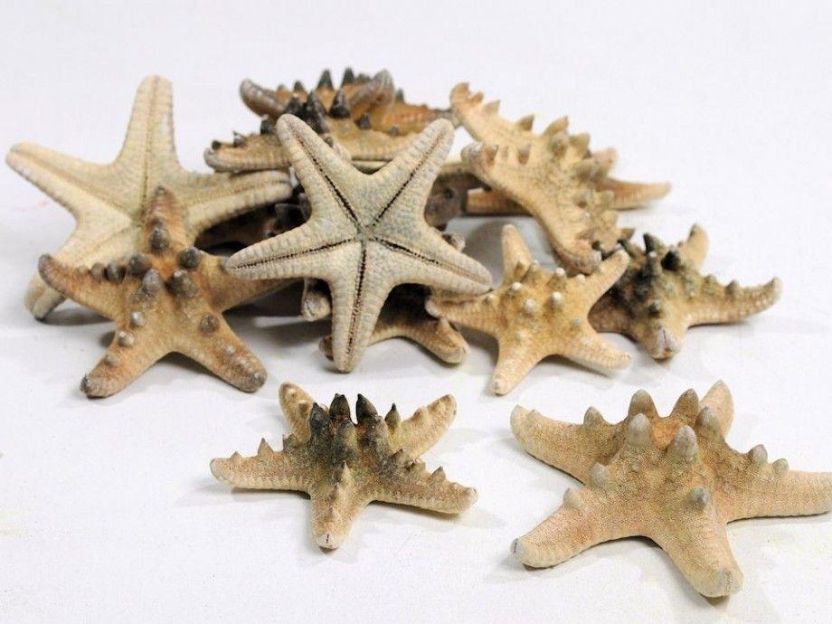 Shell Shells Seastar Deco Decoration Diy Naturedecoration Schelpen