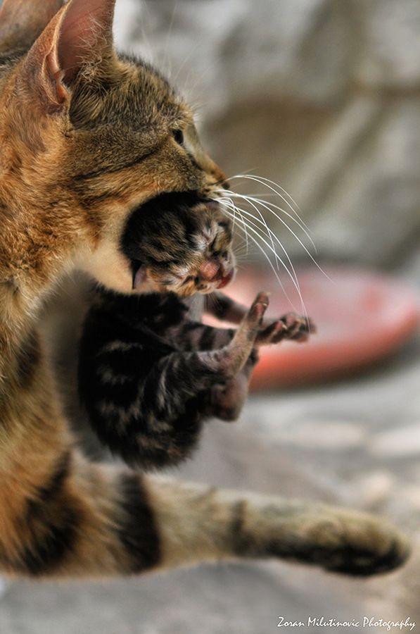 .Transportation pt.2. | CATS w/Kittens | Bébé chat, Chats ...