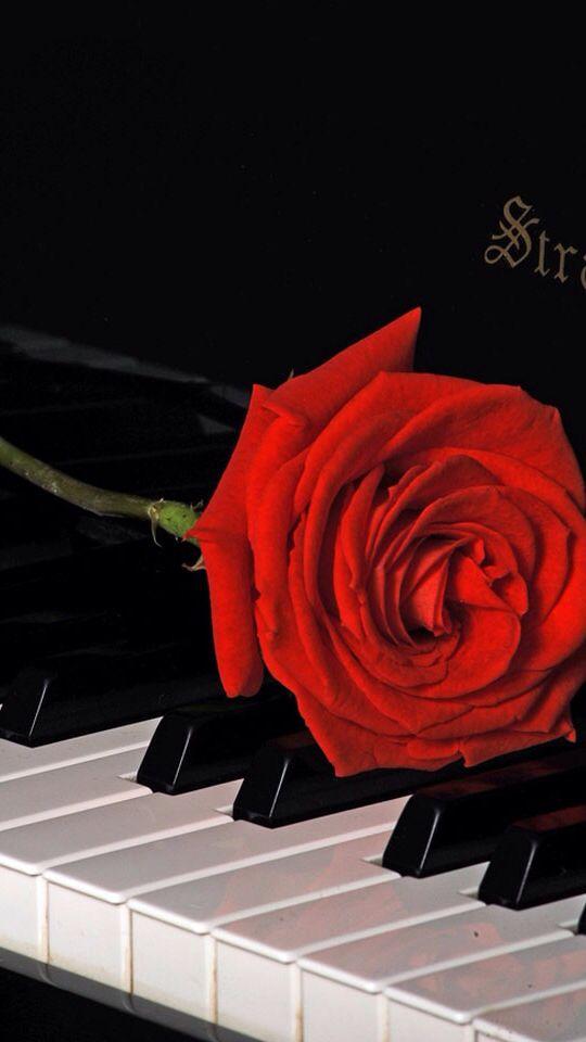 """Résultat de recherche d'images pour """"rose blanche sur un piano blanc"""""""