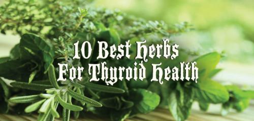 Ashwaganda - herb for immune system, anti-inflammatory and hormone balance.