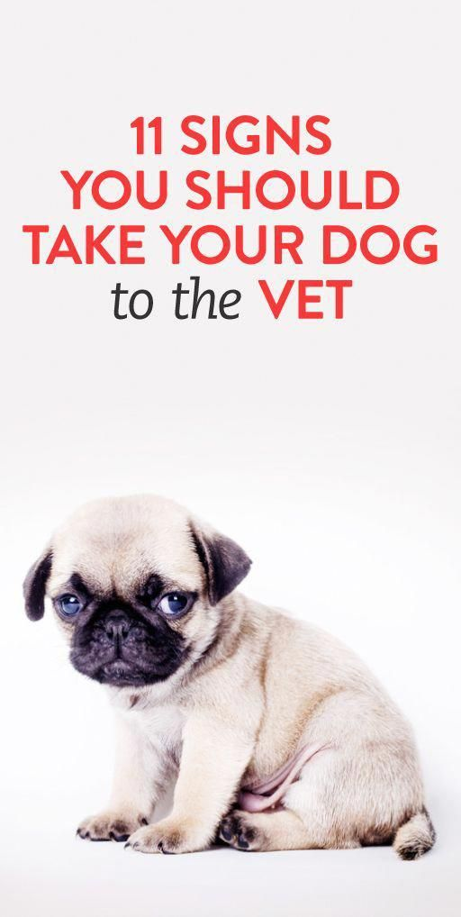11 Signs You Should Take Your Pup To The Vet