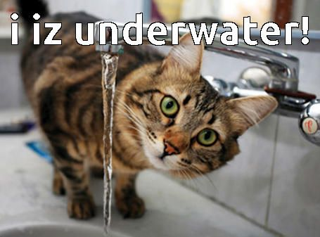 cat meme of cat underwater