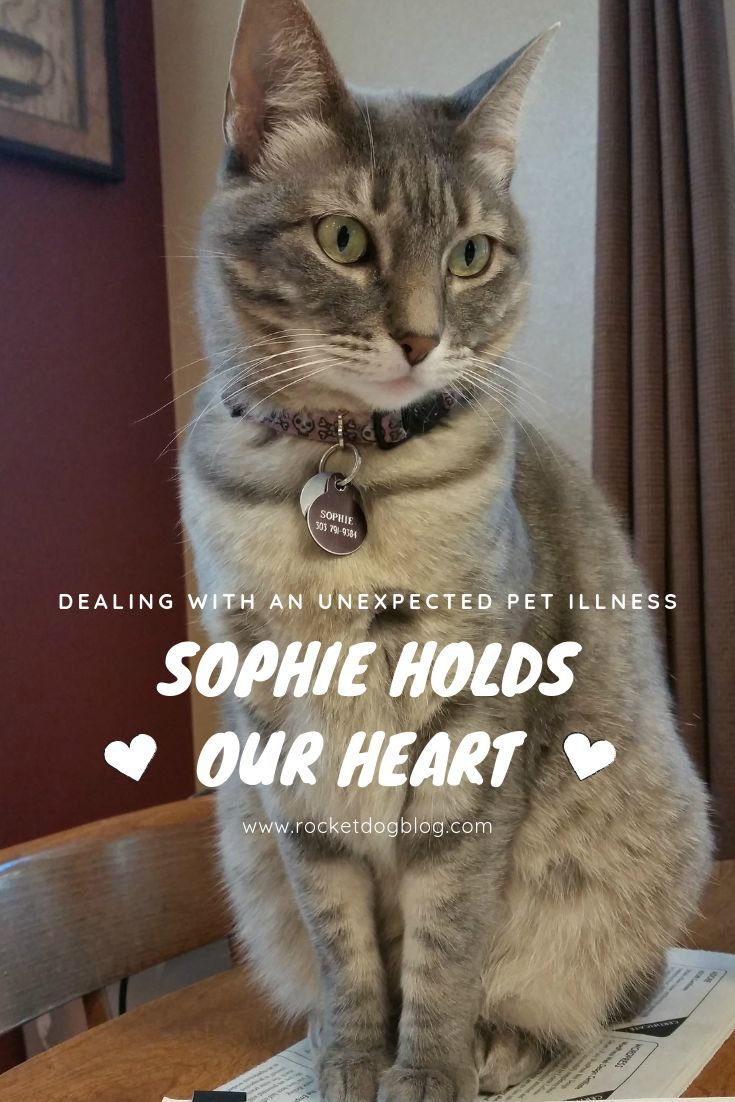 Sophie Holds Our Heart Dog blog, Pet clinic, Pets